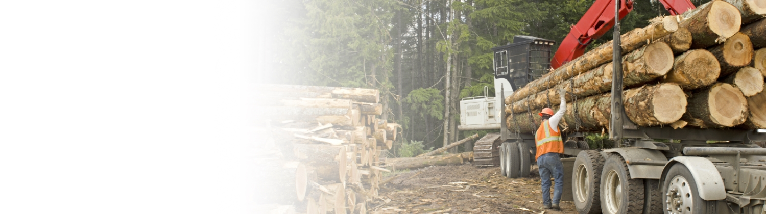 forestry industry insurance